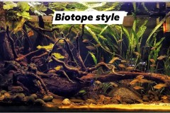 Biotope-style-aquascaping
