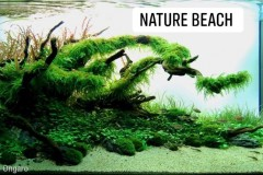 Natural-aquasape-with-beach