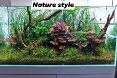 Nature-aquascape-red-lotus