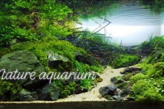 Nature-aquascape