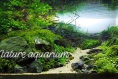 Nature-aquascape