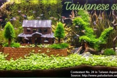 Taiwanese-style-aquascaping-2