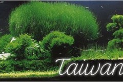 Taiwanese-style-aquascaping