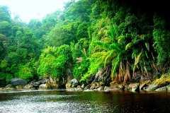 Amazon-Rainforest-Jungle-Black-River