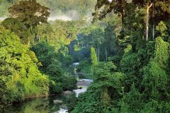 Malaysia-body-of-water-and-trees-nature-landscape