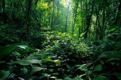 RainForest-landscape-aquascaping