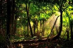 amazon-Rainforest-trees-sun-rays-mist-sun-beams