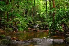 amazon-brasil-jungle-aquacape-inspiration