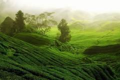 green-grass-field-green-field-during-daytime-nature-landscape