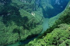 green-leafed-tree-river-rocks-trees-bends-amazon-nature