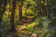 nature-landscape-5