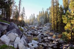 pine-forest-yosemite-aquascaping