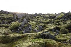 rocks-covered-with-plants-and-moss