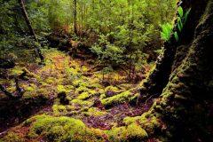 tarkine-forest-landscape