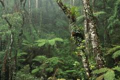 vegetation-forest-kinabalu-park-rainforest-sabah-malaysia