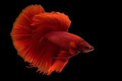 betta-fish-blackwater