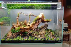 1-Spider-wood-aquascape