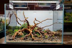 1-Spiderwood