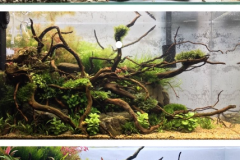 Aquascaping Aquarium Plants Chicago