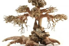 BONSAI-TREE-AQUASCAPING