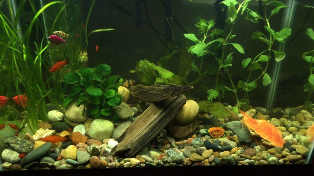 first-20-gallons-aquarium-2