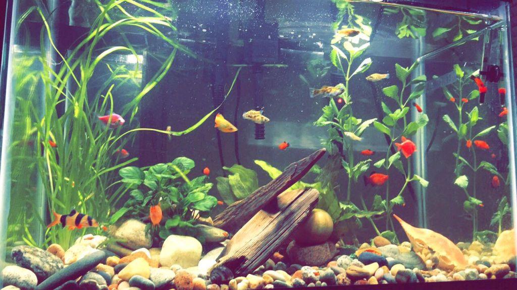 first-20-gallons-aquarium-3