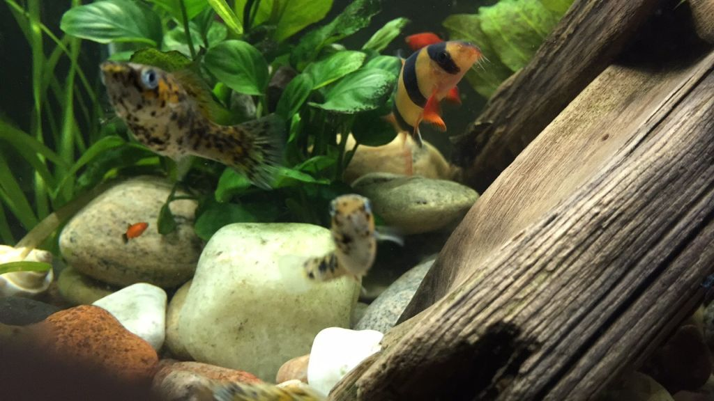 first-20-gallons-aquarium-4