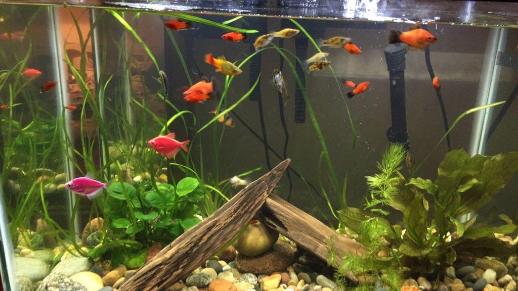 first-20-gallons-aquarium-5