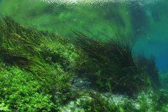 freshwater-underwater-scenery