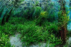 natural-habitat-river-around-bonito