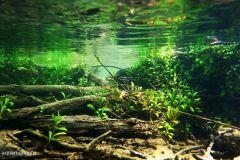 natural-underwater-habitat-2