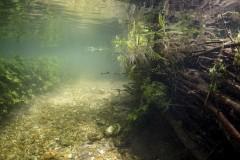 natural-underwater-habitat
