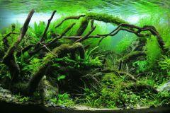 nature-style-aquascape-IAPLC-2012