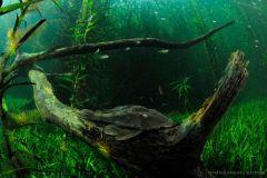 uderwater-planted-natural-habitat-pleco-fish