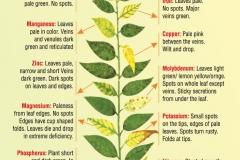 plants-deficiencies-2