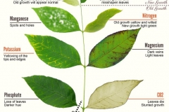 plants-deficiencies