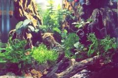 Dragon-Stones-Aquascape