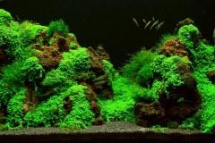 LAVa-stones-aquascape