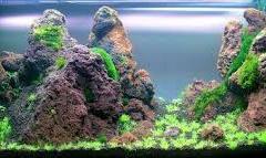Red-Lava-rocks-aquascape