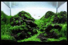 black-lava-rocks-aquascape-aquarium-aquadesign