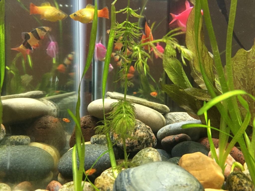 very low-tech aquarium