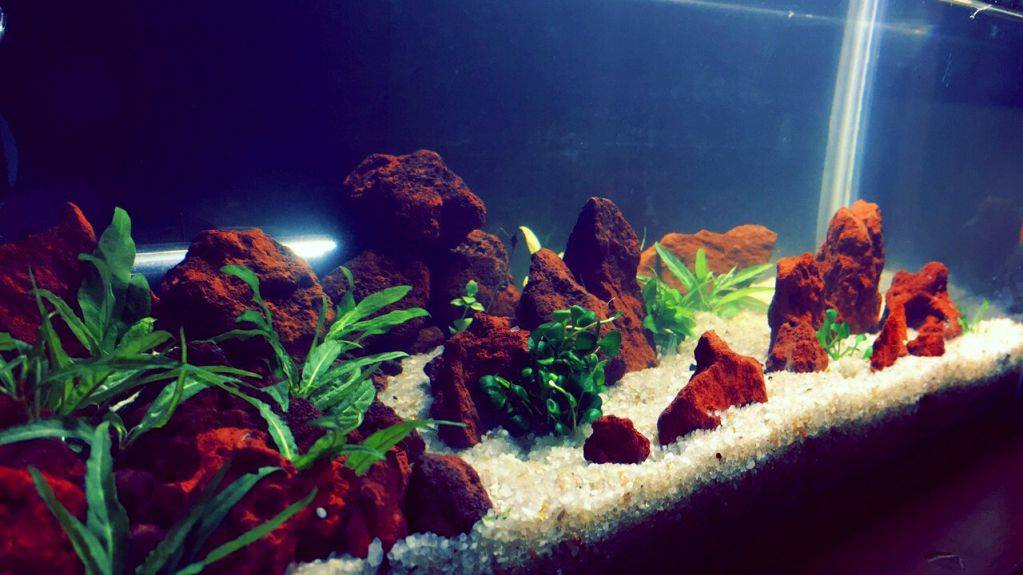 red aquarium lava rocks aquascape planted