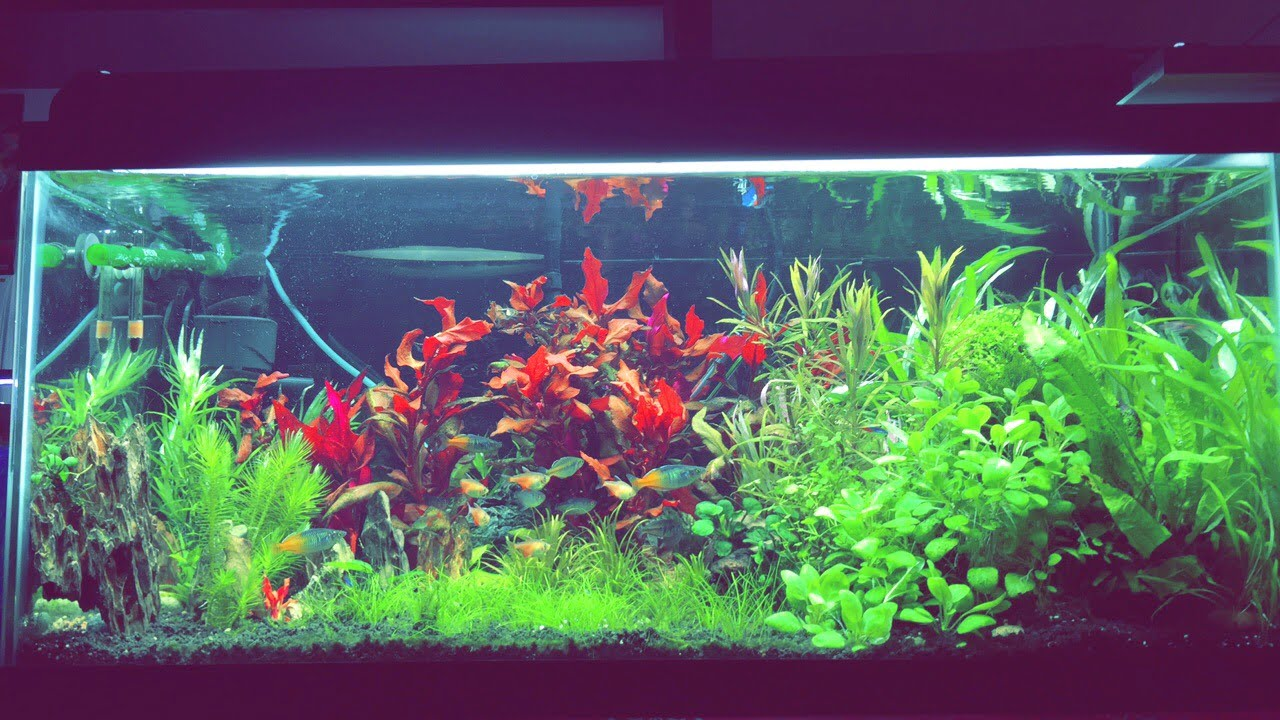 40 gallons breeder after adding a dragon stone