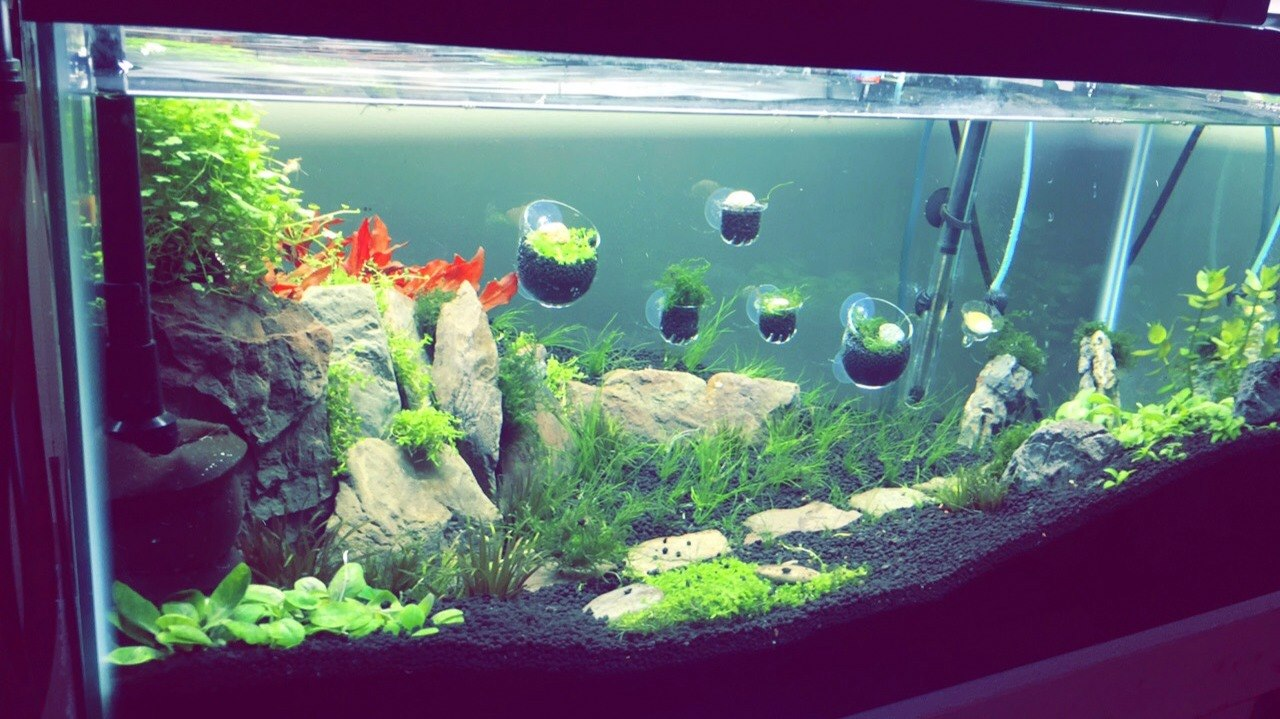 40 g cliff aquascape picture after planting