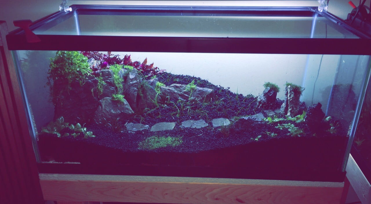 40 gallons aquascape before adding water