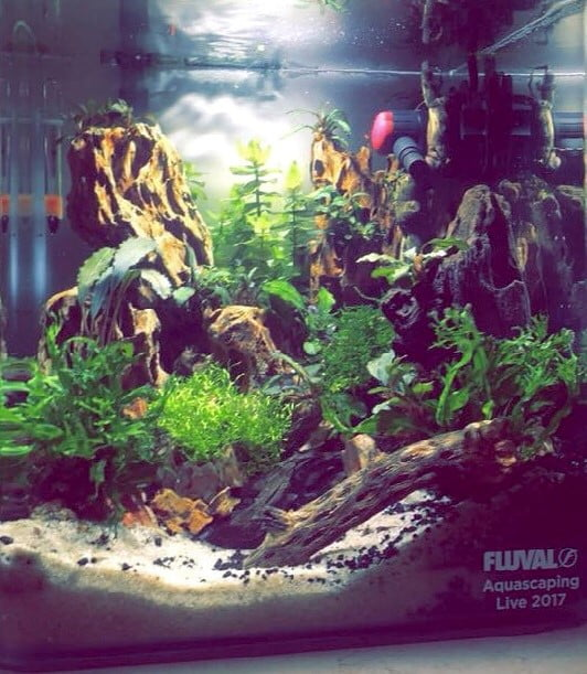 Fluval Live aquascape