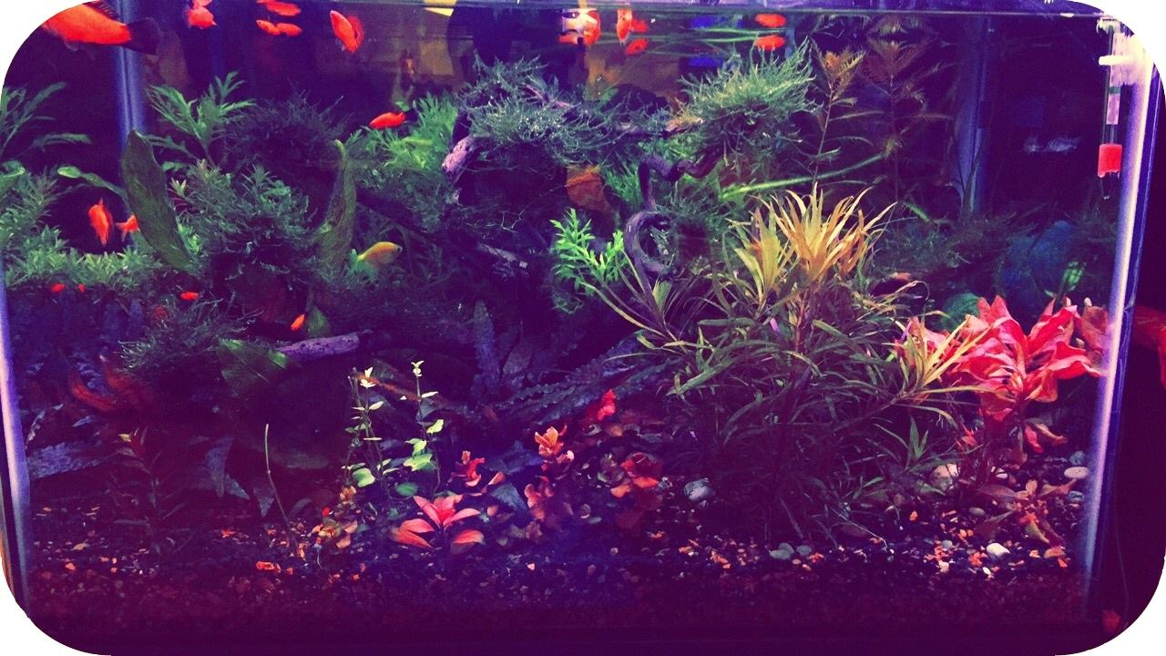 planted 20 gallons aquarium