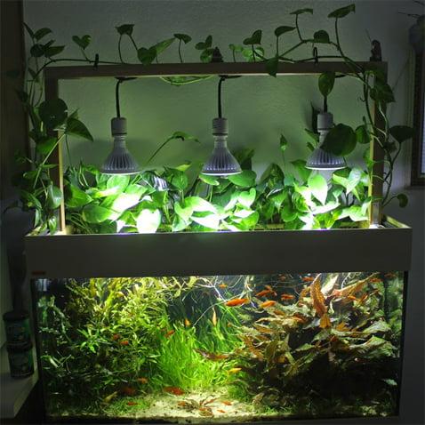 plantedaquarium-chicago.com