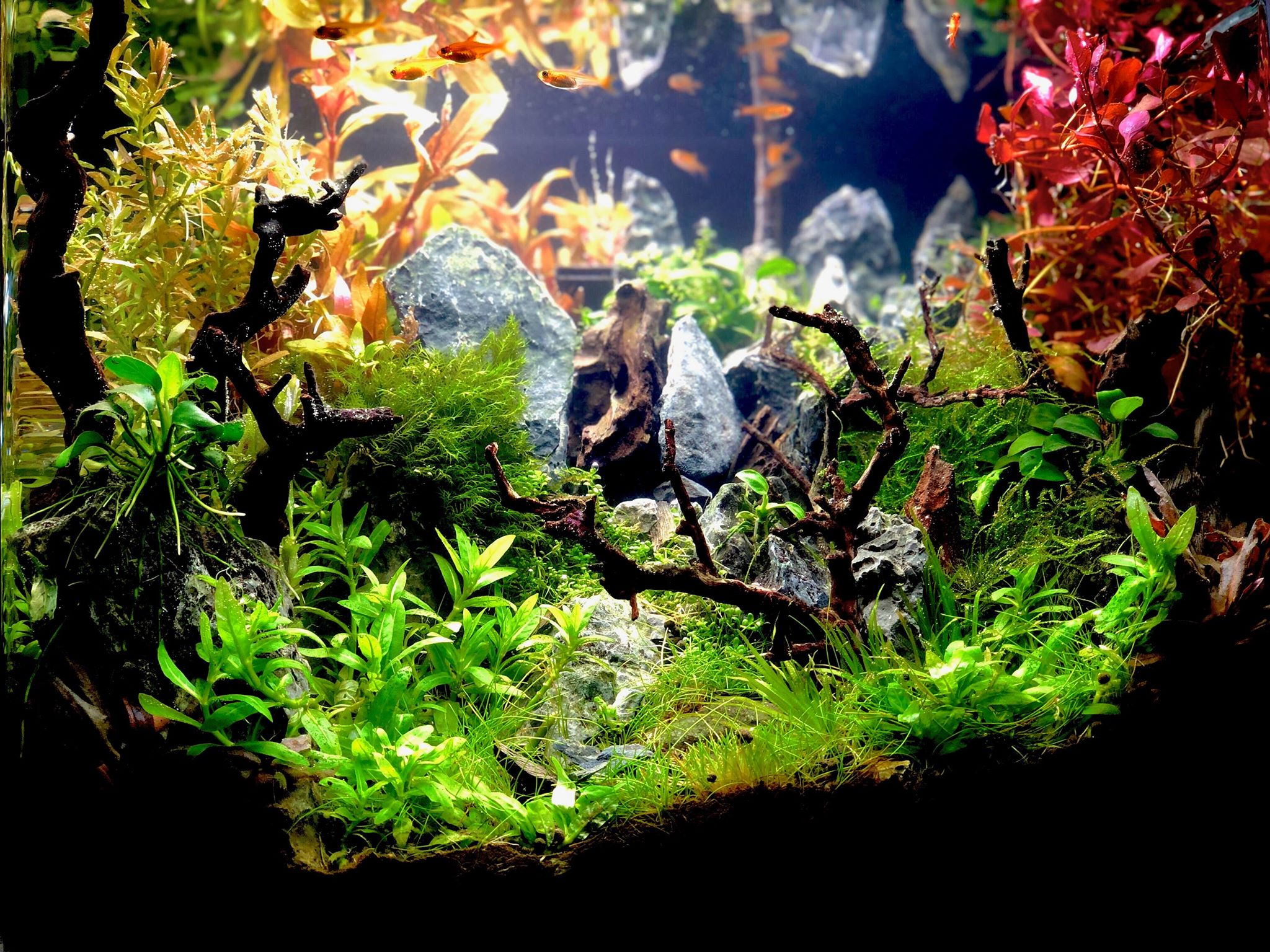 Aquatic Plants And Aquascape Aquarium Plants Chicago Aquascaping