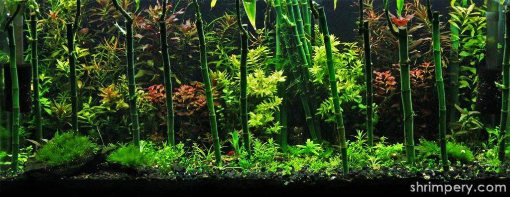 Bamboo for aquarium
